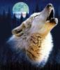 Масленица 2014 - последнее сообщение от волчонок